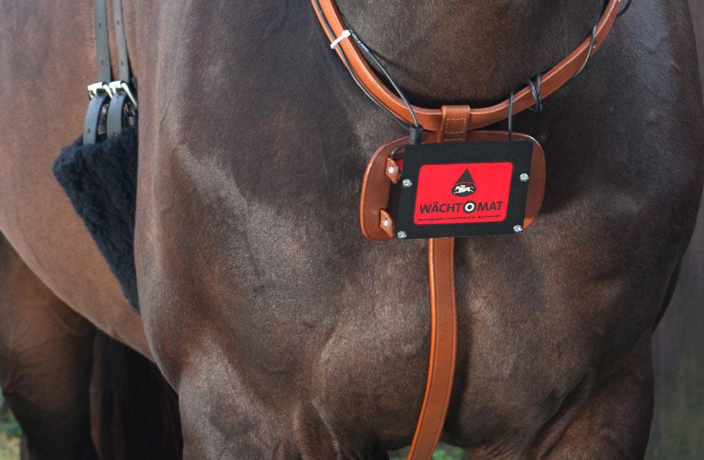 """Foto eines Pferdes mit dem Geburt Kontrollsystem """"abfohlsystem"""" für Pferde """"Wächtomat"""""""